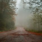 imagen camino de tierra con niebla